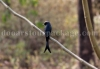 rajabhatkhawa-birds