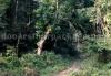 rajabhatkhawa-forest