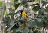 rajabhatkhawa_birds