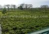 sikia-jhora-teagarden